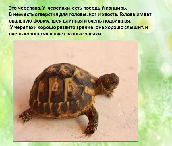 рассказ о черепах с картинками мне