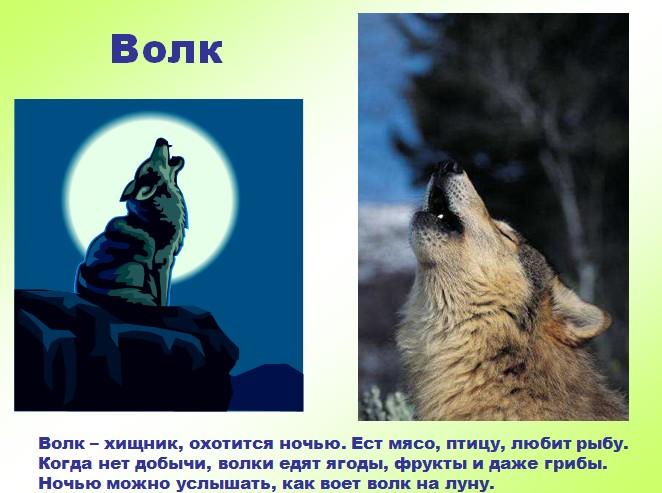 Дикие Животные Презентации Игр Для Дошкольников